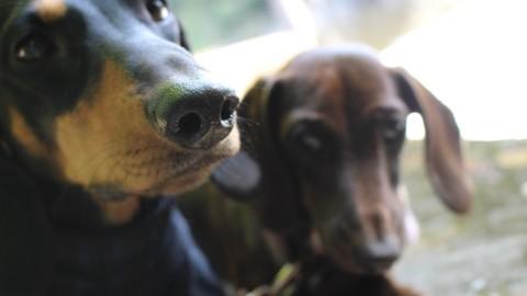 Hund trotz Rheuma – geht das?