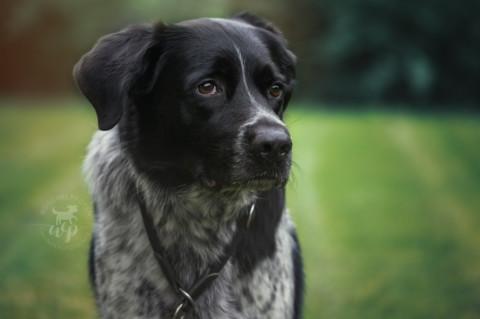 Folge 2: Was denkt mein Hund… – beim Fressen.