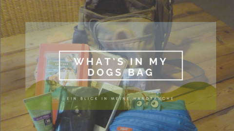 What's in my dogs bag