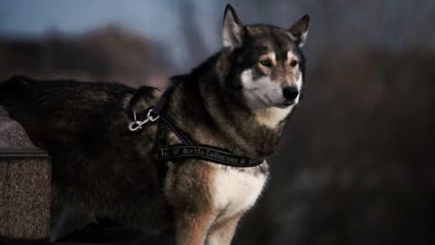 Bandscheibenvorfall beim Hund – zwei Übungen zum Nachmachen!