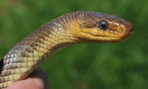 Was tun bei einem Schlangenbiss?