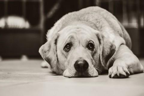 Muss mein Hund abnehmen?! So erkennst du Übergewicht beim Hund!