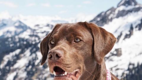 Packliste für den Urlaub mit Hund