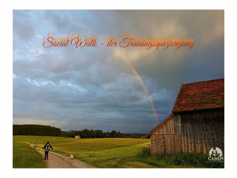 SOCIAL WALK – DER TRAININGSSPAZIERGANG