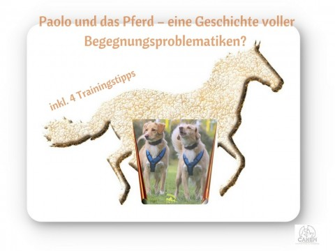 PAOLO UND DAS PFERD – EINE GESCHICHTE VOLLER BEGEGNUNGSPROBLEMATIKEN? (INKL. 4 TRAININGSTIPPS)