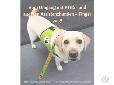 VOM UMGANG MIT PTBS- UND ANDEREN ASSISTENZHUNDEN – FINGER WEG!