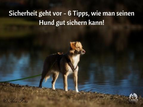 SICHERHEIT GEHT VOR – 6 TIPPS, WIE MAN SEINEN HUND GUT SICHERN KANN!