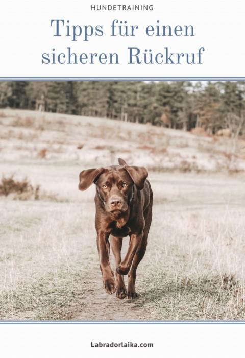Tipps für einen sicheren Rückruf – Hundetraining, Hundeerziehung