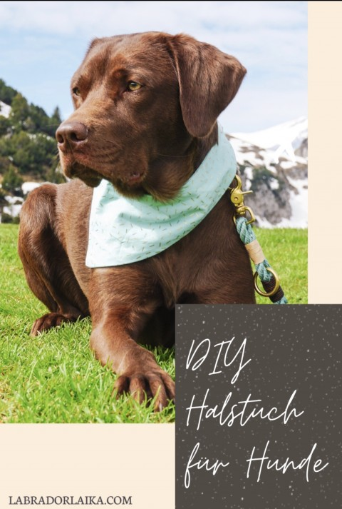 DIY Halstuch für Hunde