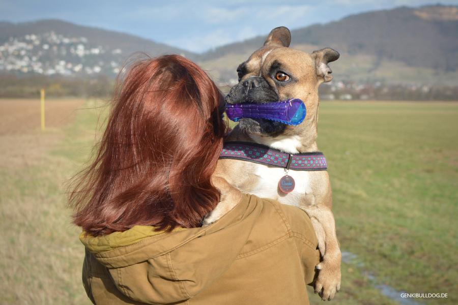 Warum Du Deinen Hund hochnehmen solltest