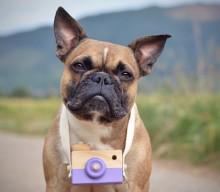 Die Perspektive bei der Hundefotografie