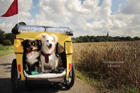 Anhänger Fahrrad für Hunde Erfahrungen