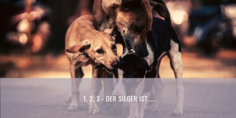 Spielverhalten beim Hund | 1, 2, 3 der Sieger ist….