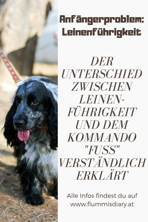 Leinenführigkeit beim Hund – so hat es bei uns geklappt!