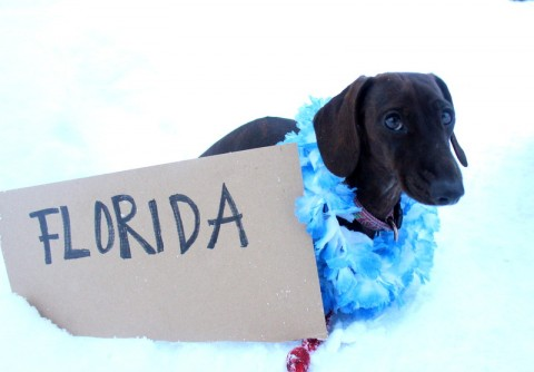 Winter-Blues bei Hund und Mensch – Was wir dagegen tun