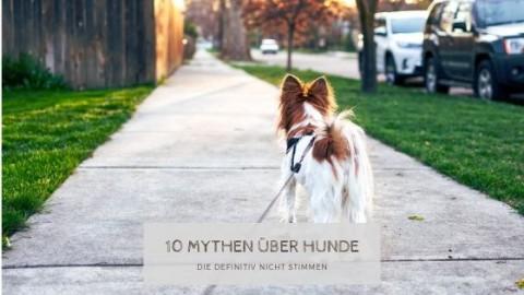 10 Mythen über Hunde