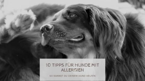 10 Tipps für Hunde mit Allergien