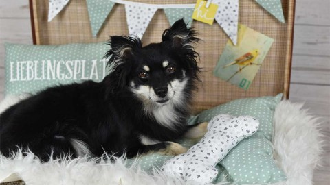 10 Tipps – Indoor Fotoshooting mit Hund