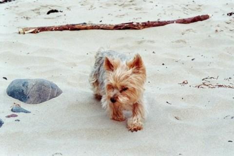 Eine Liebeserklärung an einen Herzhund