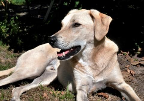 Darmaufbau beim Hund (vor allem nach Tierheimaufenthalt oder Antibiotikatherapie)
