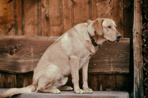 11 Tipps bei Spondylose – so hilfst du deinem Hund!