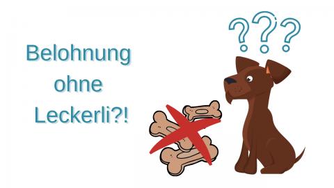 Hundetraining ohne Leckerli