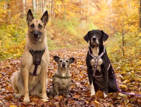 Auslaufmodell Einzelhund