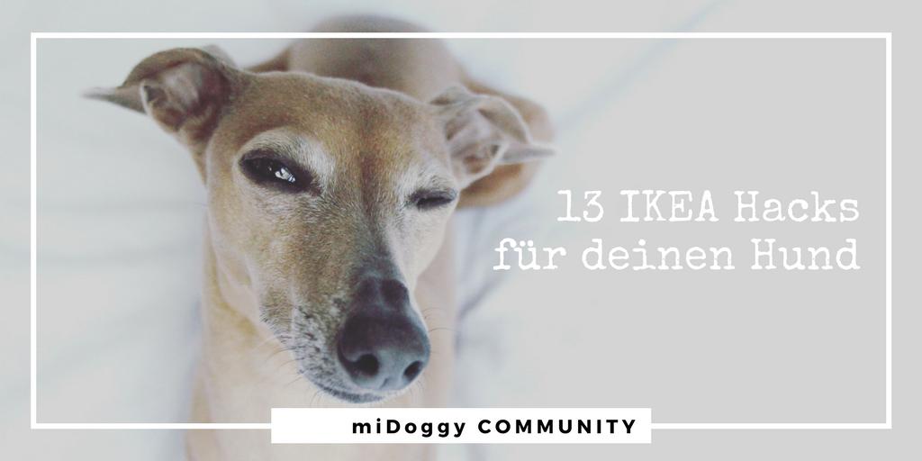 13 ikea hacks f r deinen hund midoggy community for Ikea trinkbecher
