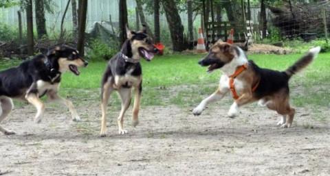 Playdate für Hunde