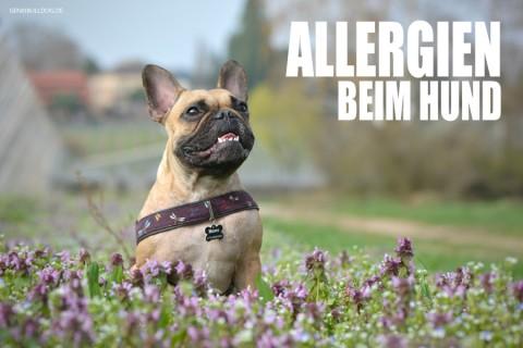 Allergien beim Hund – Die unendliche Geschichte