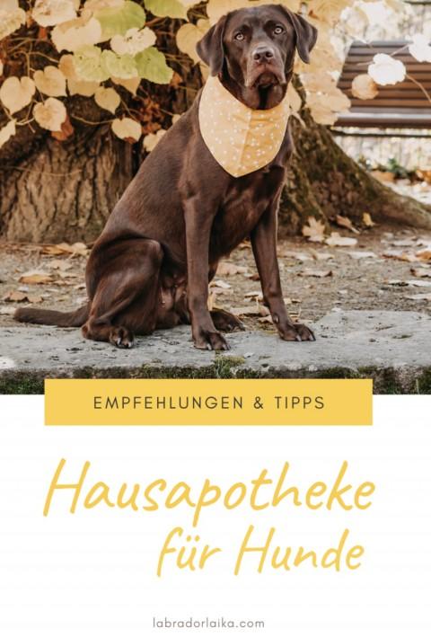 Hausapotheke und Erste Hilfe Set für Hunde