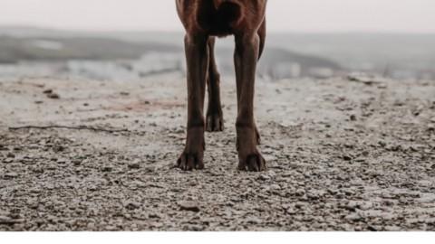 Die 6 wichtigsten Hundekommandos