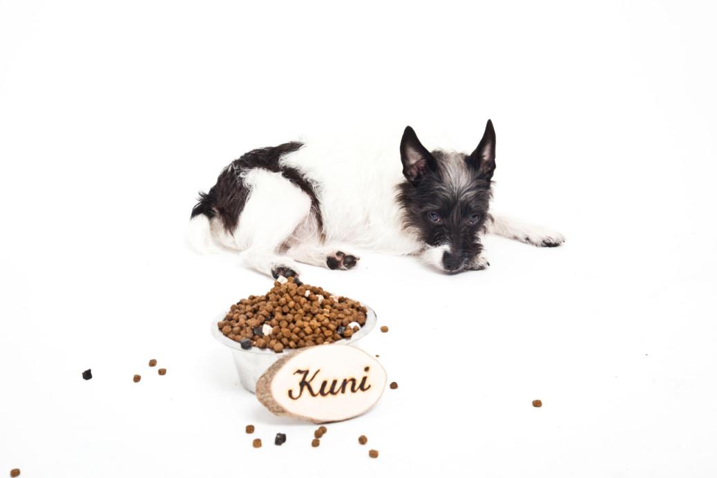 Mäkeliger Hund Kostverächter Futterwechsel