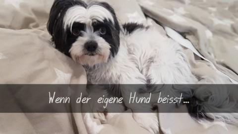 Wenn der eigene Hund beisst…