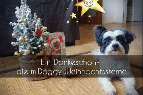 Ein Dankeschön- die miDoggy Weihnachtssterne