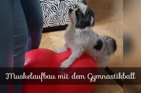 Muskelaufbau mit dem Gymnastikball