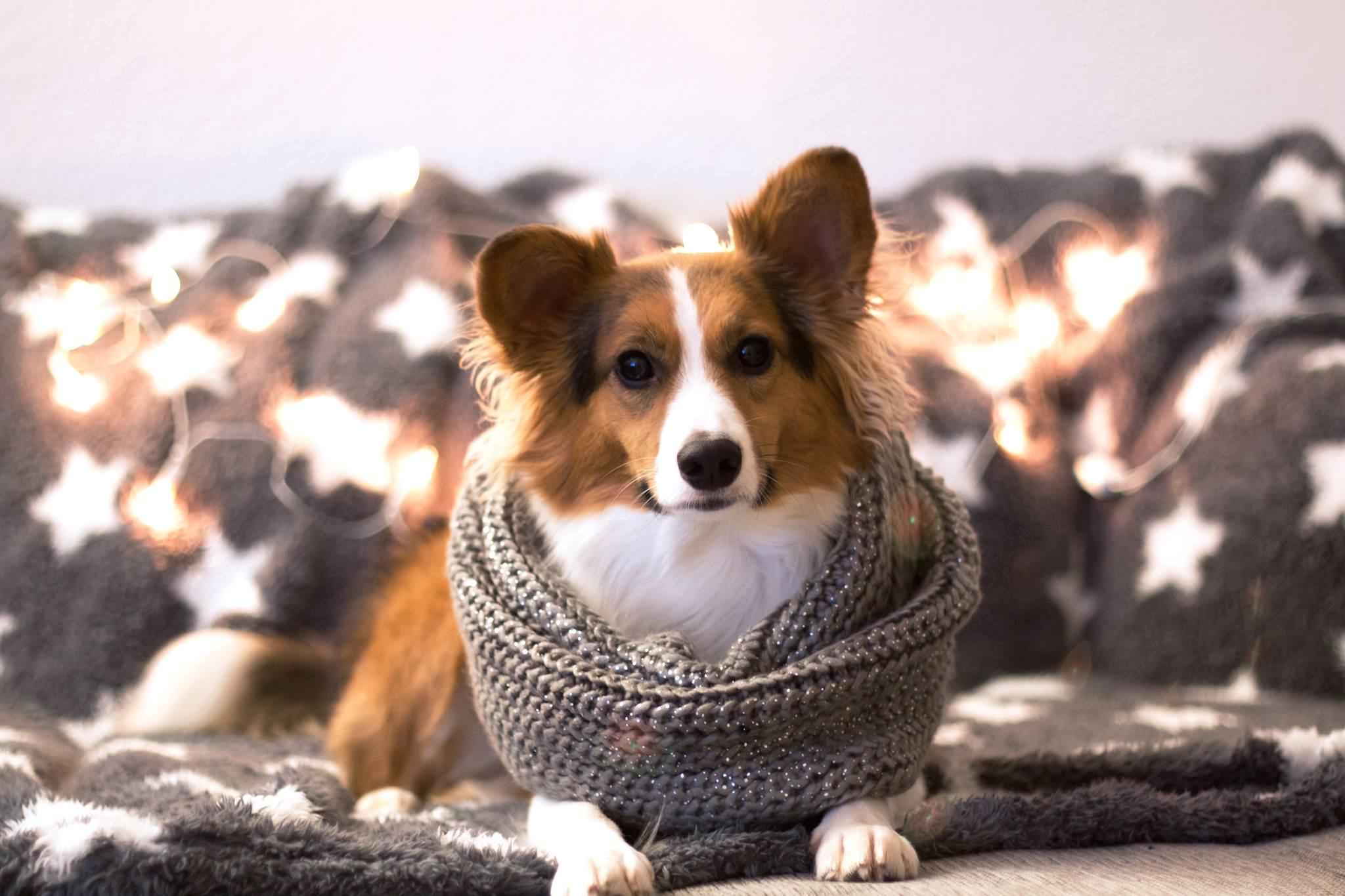 Leuchthalsbänder bei Hunden mit langem Fell