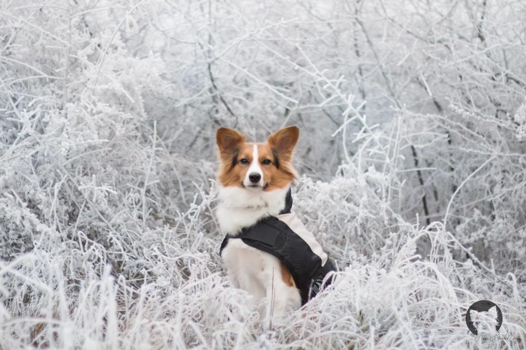 Angst bei Tierschutz Hunden besiegen