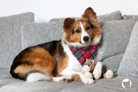 Kaya's Gassi-Knigge – 6 Arten von Hundebesitzern die uns auf die Palme bringen