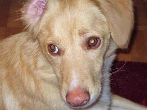 Paolo und das Leben mit einem ängstlichen Hund – MiDoggy Blogparade