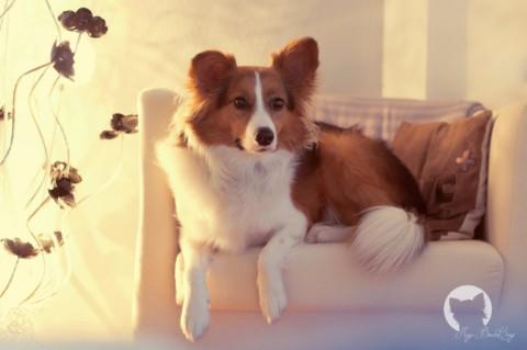 [miDoggy-Parade] – Hund und Arbeit