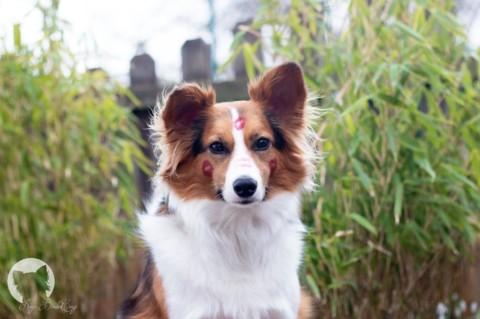 Training mit Kaya's neuer Hundepfeife