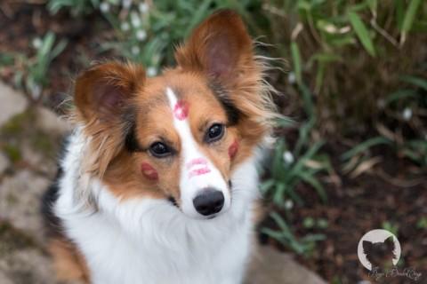 [miDoggy Parade] Always kiss your dog goodbye – Hund allein daheim