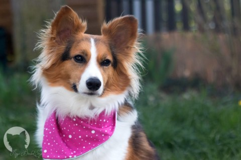 Sicher im Straßenverkehr – Kaya's neuer Hunde-Autositz