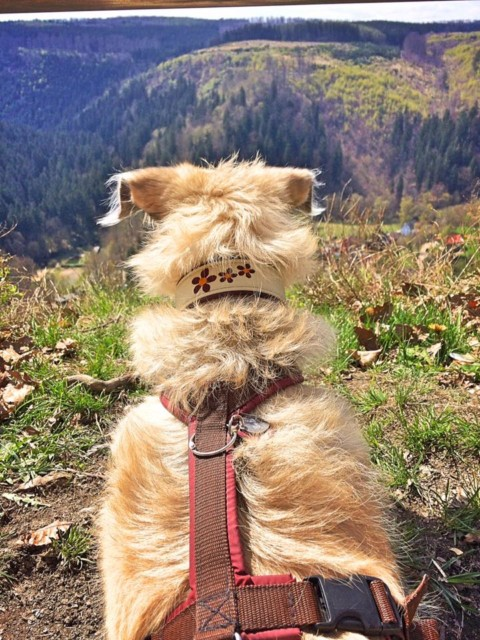 [miDoggy-Parade] – Urlaub mit oder ohne Hund?