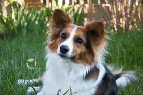 Böse Vorurteile – Jeder Hund ist Gold wert
