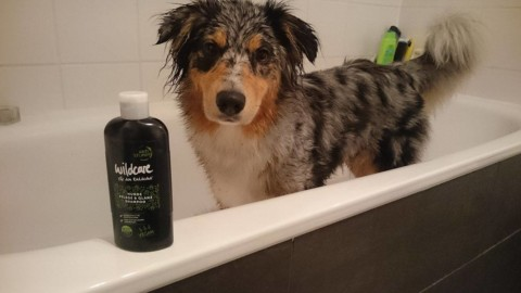 Produkttest Wildcare Hunde Pflege & Glanz Shampoo