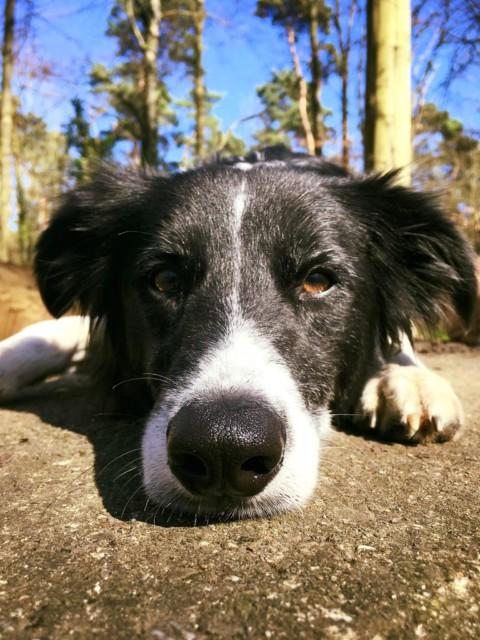 Ich bin wirklich sehr gerne Hundebesitzer, aber…