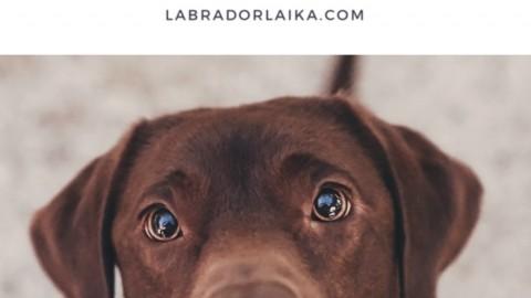 Hunde richtig fotografieren Hundefotografie