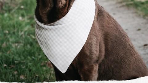 DIY für Hunde Halstuch selbst nähen